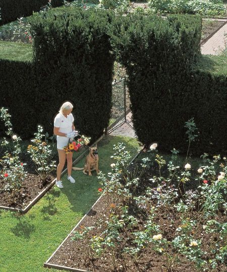 CZ Guest walking through her cutting cutting garden.